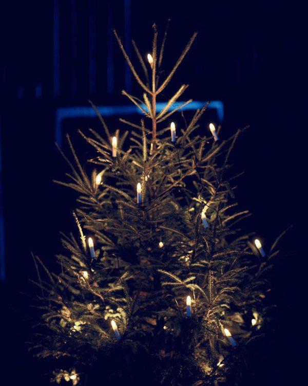 julgran utomhus med julgransbelysning