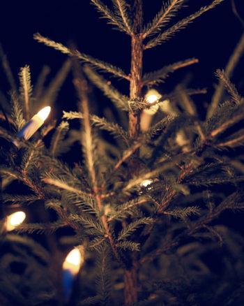 Belysning utomhus i julgran
